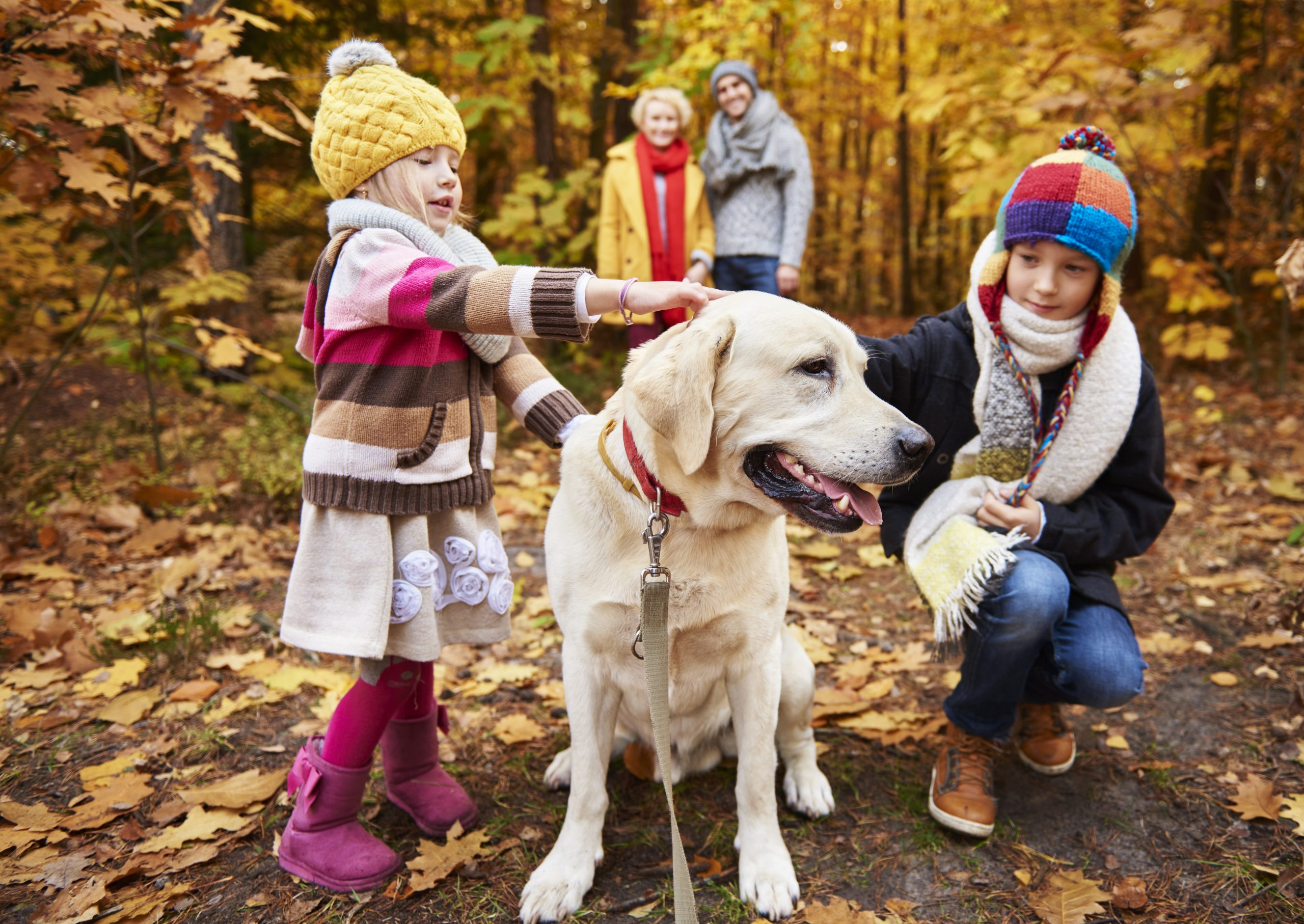 Teaching Children to Care for Pets