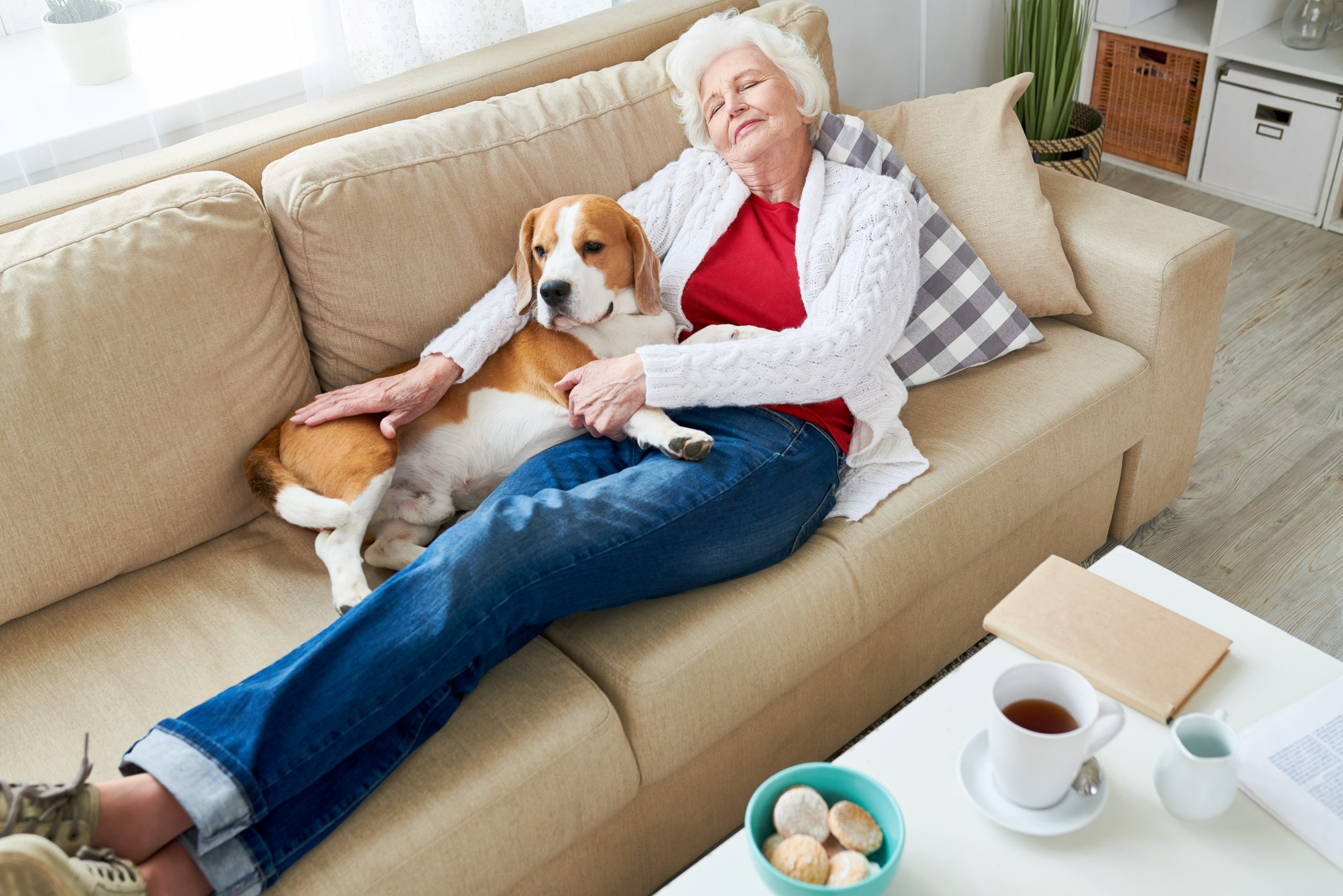 10 ways to spend more time with your pets